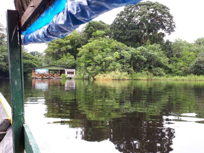 Natutama's observation centre to monitor rare Amazon species such as manatees and pink dolphins